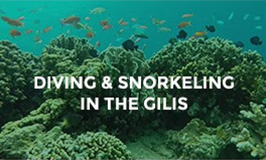 Diving & Snorkeling in the Gilis